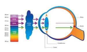 UV Rays to Eye